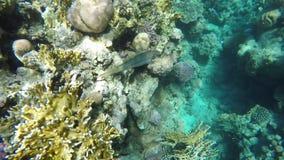 Morskie flory i fauny zbiory
