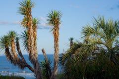 morskie palmowi drzewa Zdjęcia Stock