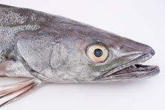 Morszczuk ryba Zdjęcie Royalty Free