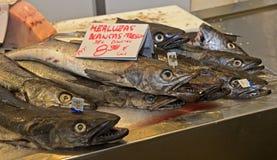 Morszczuk ryba dla sprzedaży Zdjęcie Royalty Free