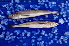 Morszczuk ryba na lodowym bocznym widoku Zdjęcie Stock