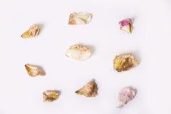 Mort séchez les pétales des roses sur le bakground blanc Photos libres de droits