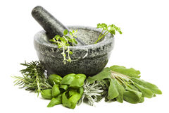 Free Mortar And Pestle With Fresh Herbs Royalty Free Stock Photo - 22995015