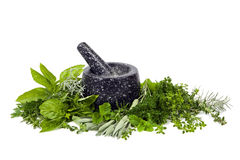 Mortar And Pestle With Fresh Herbs Over White Royalty Free Stock Photography