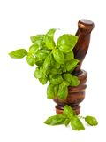 Mortar with basil Stock Images