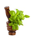 Mortar with basil Royalty Free Stock Images