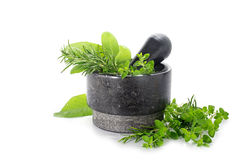 Mortar from black granite with fresh herbs, oregano, rosemary an Stock Photo