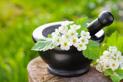 Mortar with blossom hawthorn Royalty Free Stock Photography