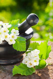 Mortar with blossom hawthorn Royalty Free Stock Image