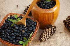Mortar with blueberries and pine cones. Fresh blueberries in different containers Stock Photography