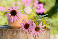 Mortar with coneflower and healing herbs. Herbal medicine royalty free stock images