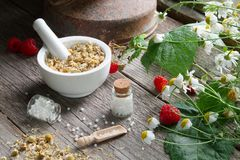 Mortar of dried daisies herbs, homeopathic globules and chamomile plants. stock photography