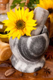 Mortar with the flower sunflower and spices Stock Photos