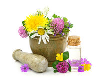 Mortar with fresh flowers and essential oil Stock Photos