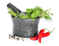 Mortar with fresh herbs Royalty Free Stock Images