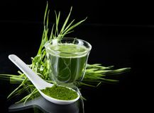 Mortar with fresh herbs Stock Image