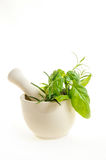 mortar with fresh herbs isolated on white background Royalty Free Stock Photo