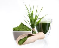 Mortar with fresh herbs Stock Photos