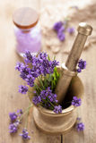 Mortar with fresh lavender Stock Images