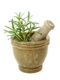 Mortar with fresh rosemary Royalty Free Stock Photography