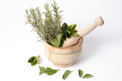 Mortar full of plants and leaves Royalty Free Stock Photography