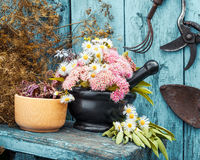 Mortar with healing herbs and garden equipment Stock Photos