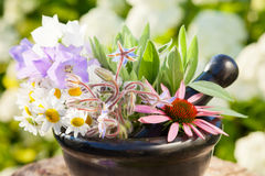 Mortar with healing herbs outdoors Stock Image