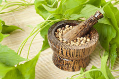 Mortar with herbs. Handmade mortar and pestle with herbs Stock Photo