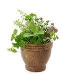 Mortar with herbs Stock Photography