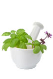 Mortar with herbs isolated Stock Photo