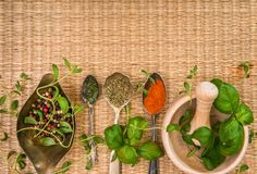 Mortar with herbs and spices Stock Images
