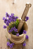 Mortar with lavender flowers Royalty Free Stock Images