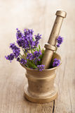 Mortar with lavender flowers Stock Photography