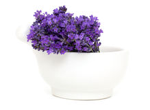 Mortar with lavender flowers Stock Images