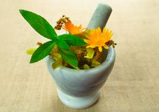 Mortar with medicinal herbs flowers of calendula, chamomile, mint and herbal tincture. Medicinal herbs. Organic cosmetology. Produ. Mortar with medicinal herbs stock photography