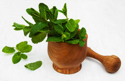 Mortar with mint. Mortar with green mint on a old white wooden background Royalty Free Stock Photography