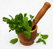 Mortar with mint. Mortar with green mint on a old white wooden background Royalty Free Stock Photo