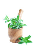 Mortar with mint Stock Images