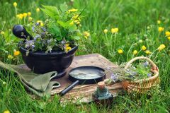 Free Mortar Of Medicinal Herbs, Old Book, Infusion Bottle, Basket And Magnifying Glass On A Grass On Meadow Royalty Free Stock Photo - 186259795