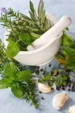 Mortar and Pestle. With fresh herbs, garlic and peppercorns Royalty Free Stock Photos