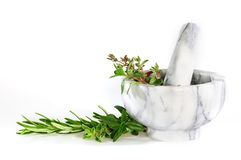 Mortar and pestle. With fresh herbs Stock Images