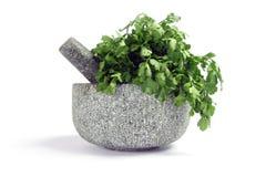 Mortar, pestle and coriander Royalty Free Stock Photo