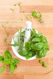 Mortar, pestle and fresh culinary herbs. Stock Image