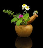 Mortar and pestle with fresh herbs Royalty Free Stock Photography