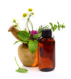 Mortar and pestle with fresh herbs. And essential oil bottle Stock Images