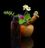 Mortar and pestle with fresh herbs and essential oil bottle Stock Images