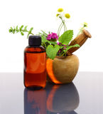 Mortar and pestle with fresh herbs and essential oil bottle Royalty Free Stock Photos