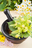 Mortar and pestle with linden flowers, chamomille and milfoil Royalty Free Stock Images
