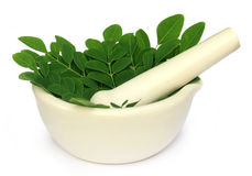 Mortar and pestle with medicinal moringa leaves. Over white background Royalty Free Stock Photos
