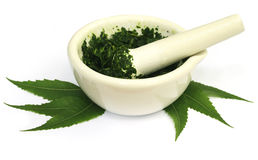 Mortar and pestle with medicinal neem leaves Royalty Free Stock Image